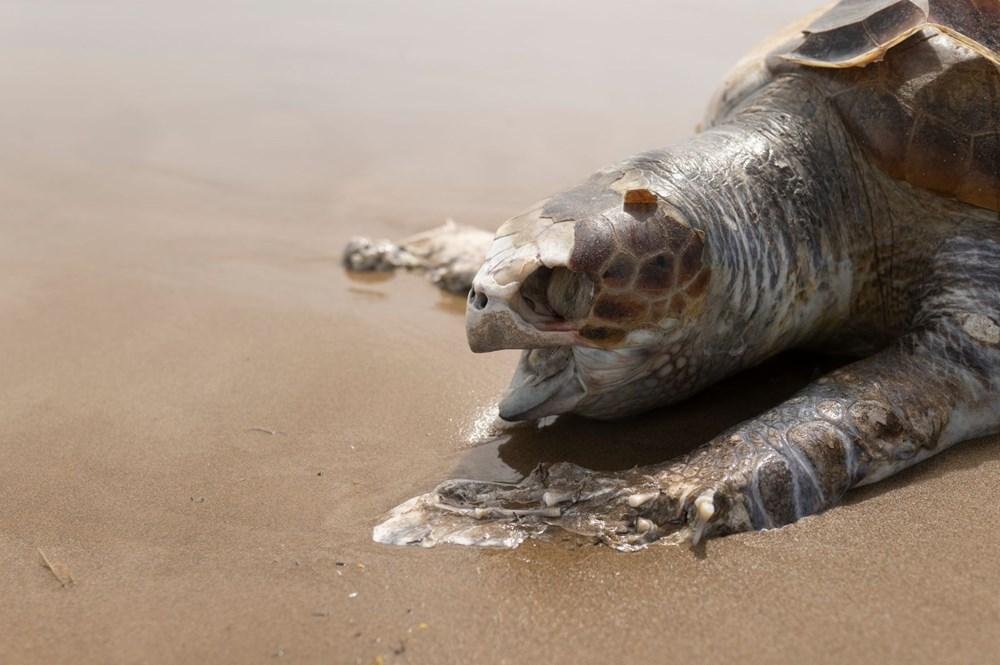 Plastik kirliliği Akdeniz'de kimyasal düzeylere ulaştı: Caretta carettalar ölüyor - 3