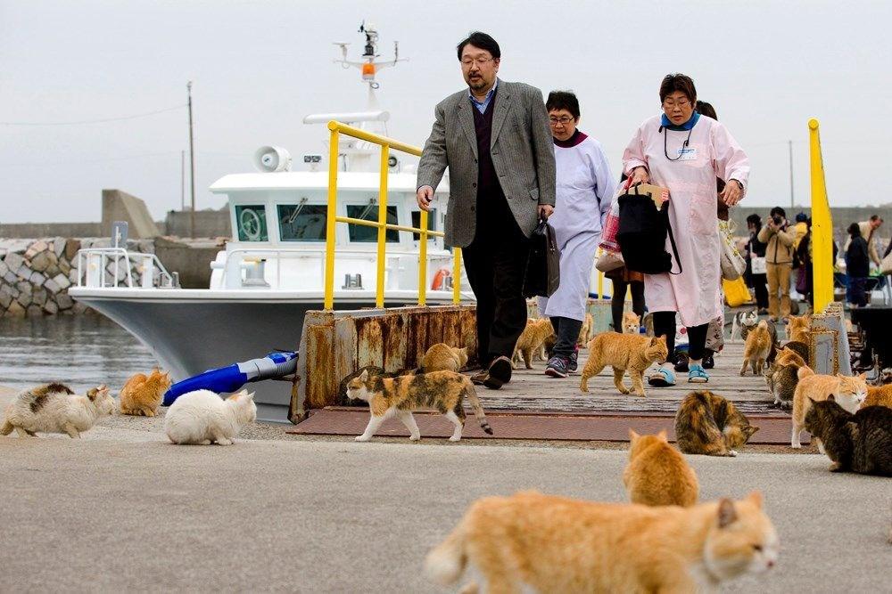 Japonya'daki kedi adası: Aoshima - 11