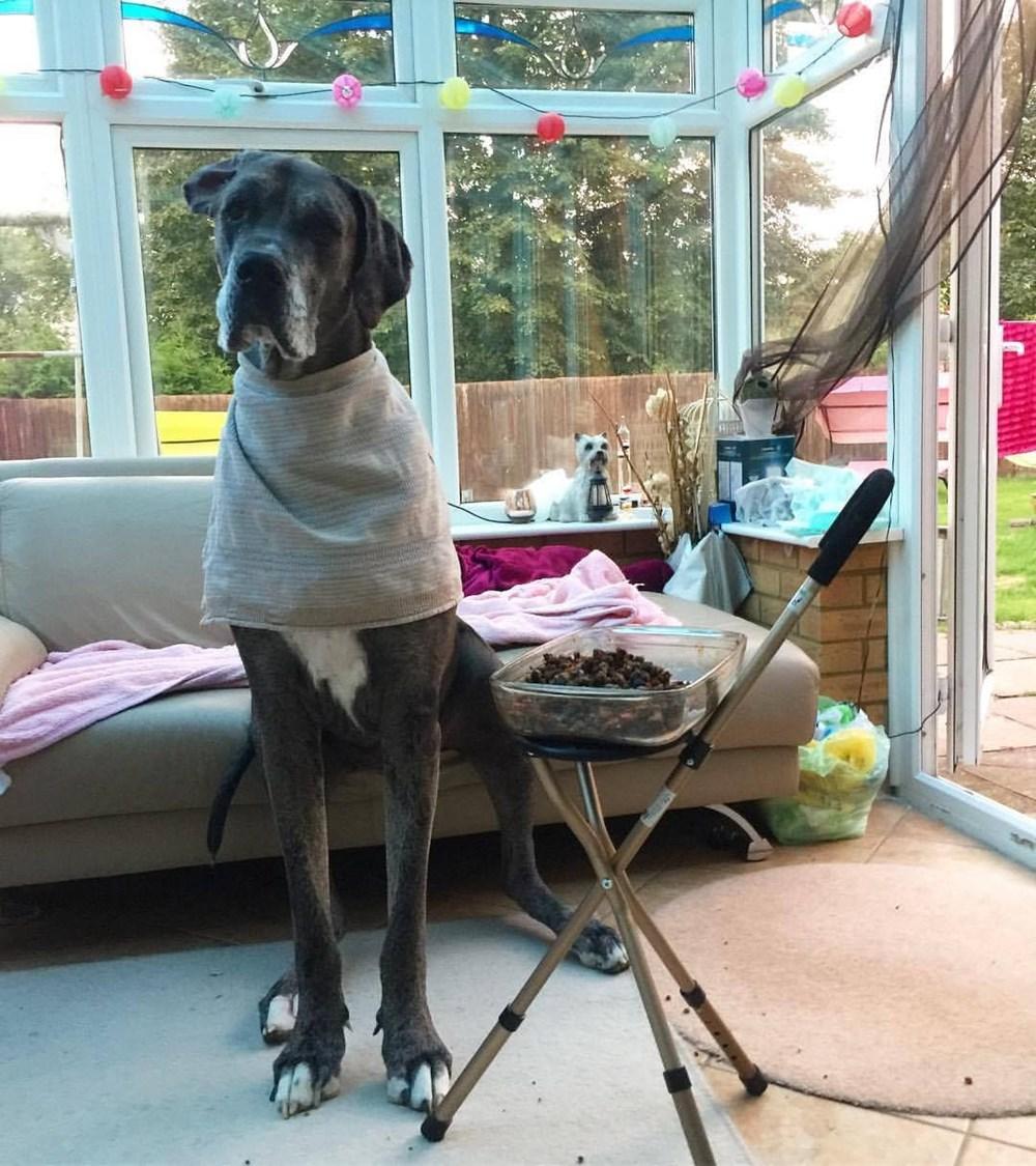 Dünyanın en uzun köpeği Freddy hayatını kaybetti - 23