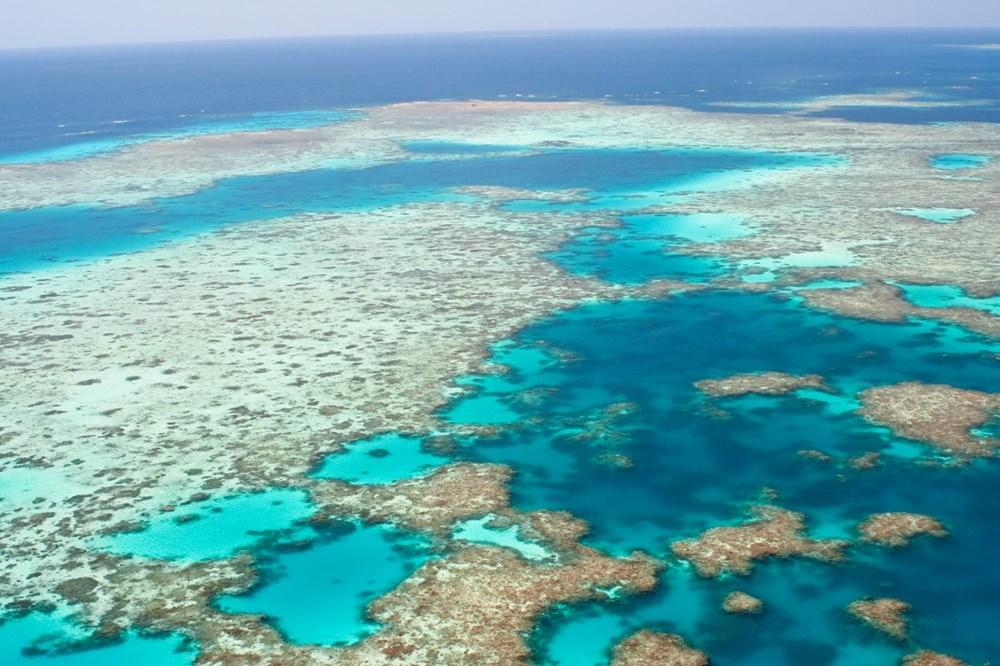 İklim değişikliği, Büyük Set Resifi'ndeki mercanların yarısını yok etti - 10