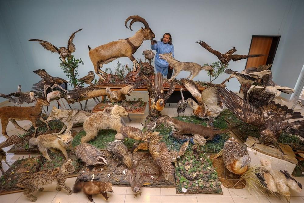 Van'da yaban hayvanları tahnit sanatıyla müzede tanıtılacak - 18