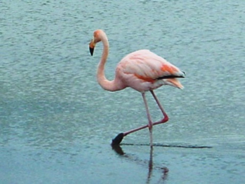 Gediz Deltası su kuşları için önemli bir beslenme ve dinlenme alanı...