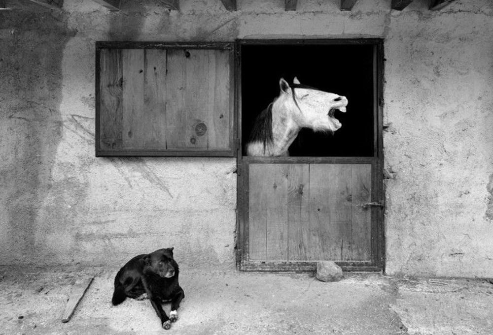 2020 Mars Petcare Komik Hayvan Fotoğrafları Yarışması'nın finalistleri - 2
