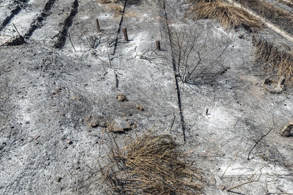 Akdeniz alev aldı: Yunanistan ve İtalya'da orman yangınları sürüyor - 19