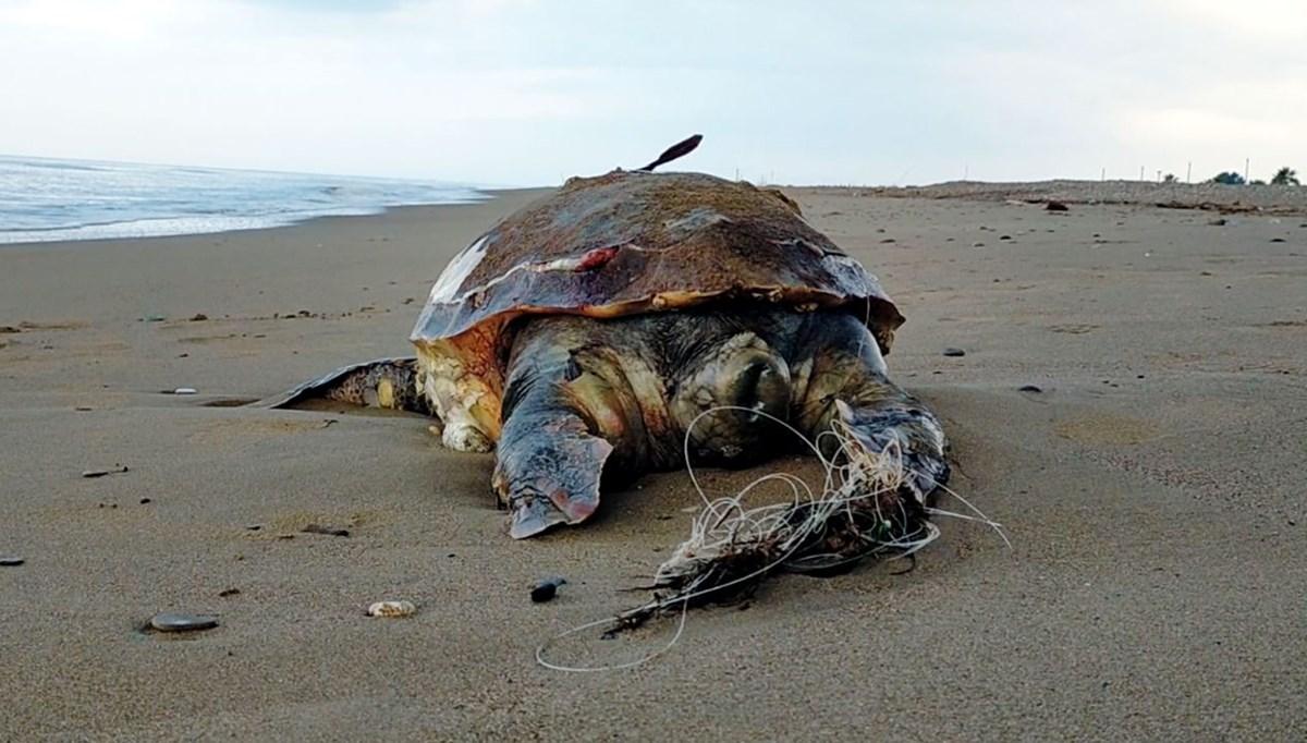 Kıyılarda kaplumbağa ölümleri arttı