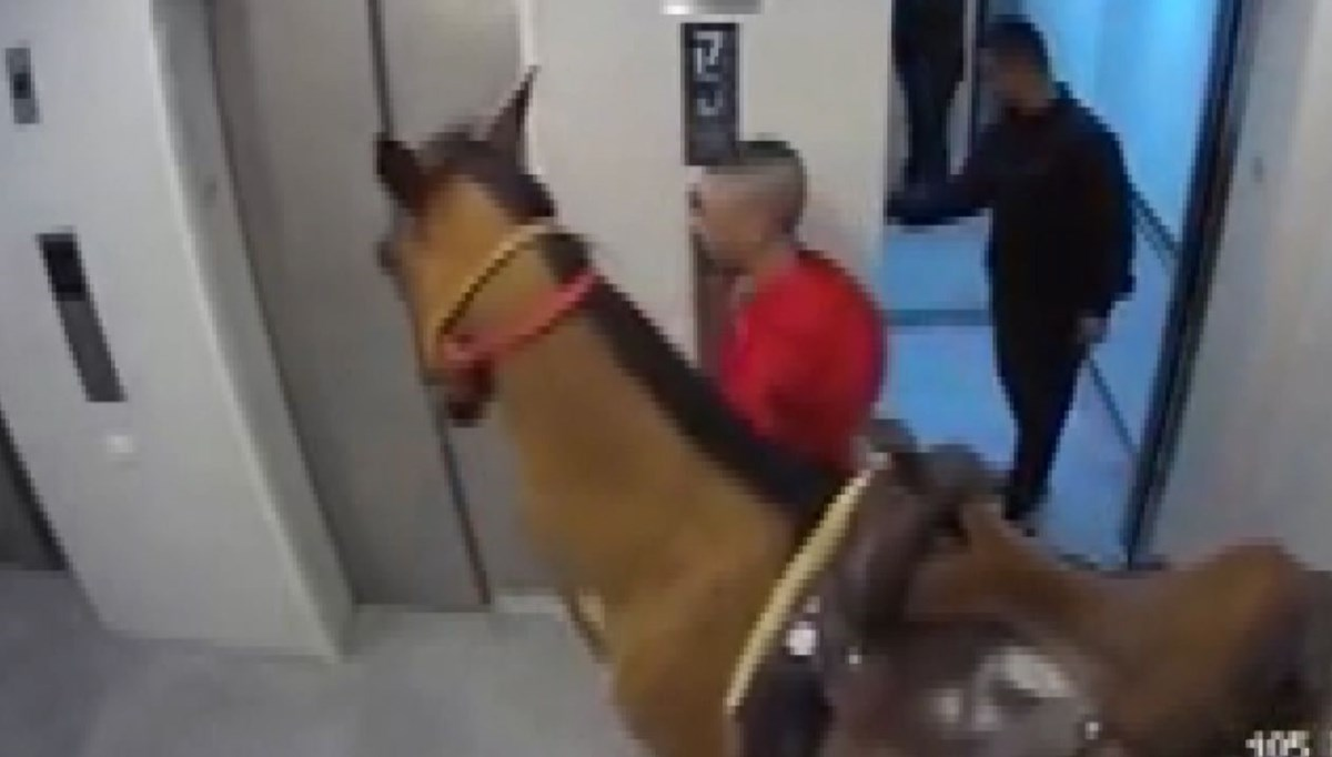 He tried to get his horse on the elevator
