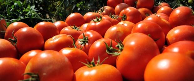 Avrupalı krizde evine çekildi domatese ilgi arttı
