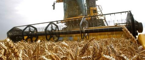 Buğday fiyatları bir yılın zirvesinde