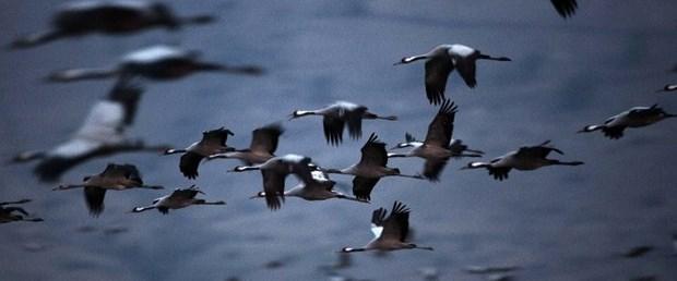 göçmen kuş.jpg