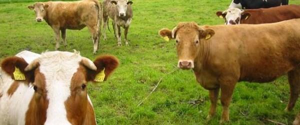 Et ihalesini Hacılar kazandı
