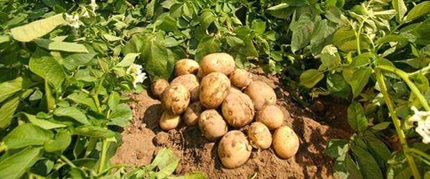 patates-fiyatlari-rekabet-in-gundeminde.Jpeg