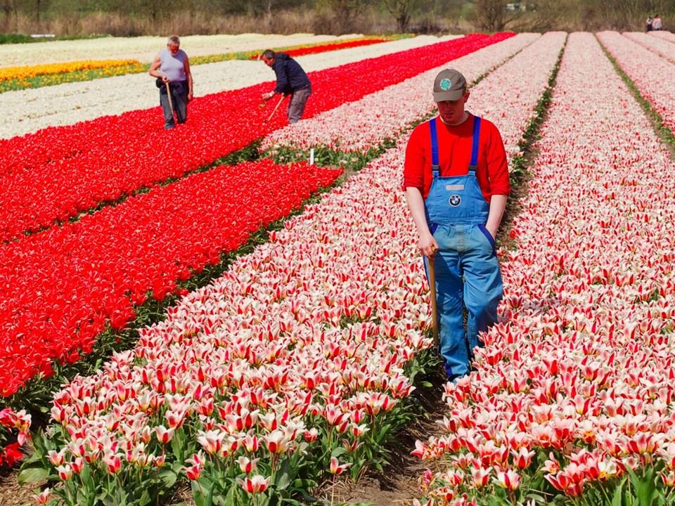7. HOLLANDA