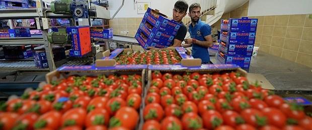 rusya domates yaş meyve talep250916.jpg