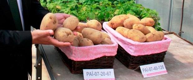 milli-patateslerin-ismi-anketle-belirlenecek_3985_dhaphoto1.jpg