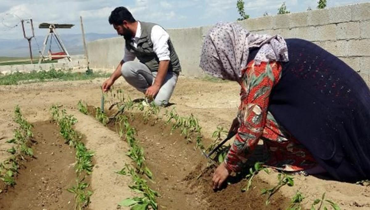 2 üniversite bitirip, 81 kenti gezdiler: Şimdi çiftçiler