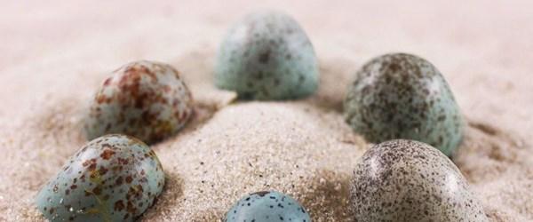 Kuş yumurtalarının renklerinde dinozor etkisi
