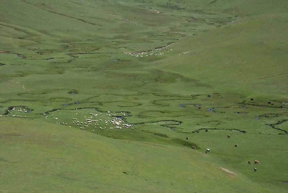 Karadeniz'in menderesleriyle ünlü Perşembe Yaylası doğaseverleri ağırlıyor - 13