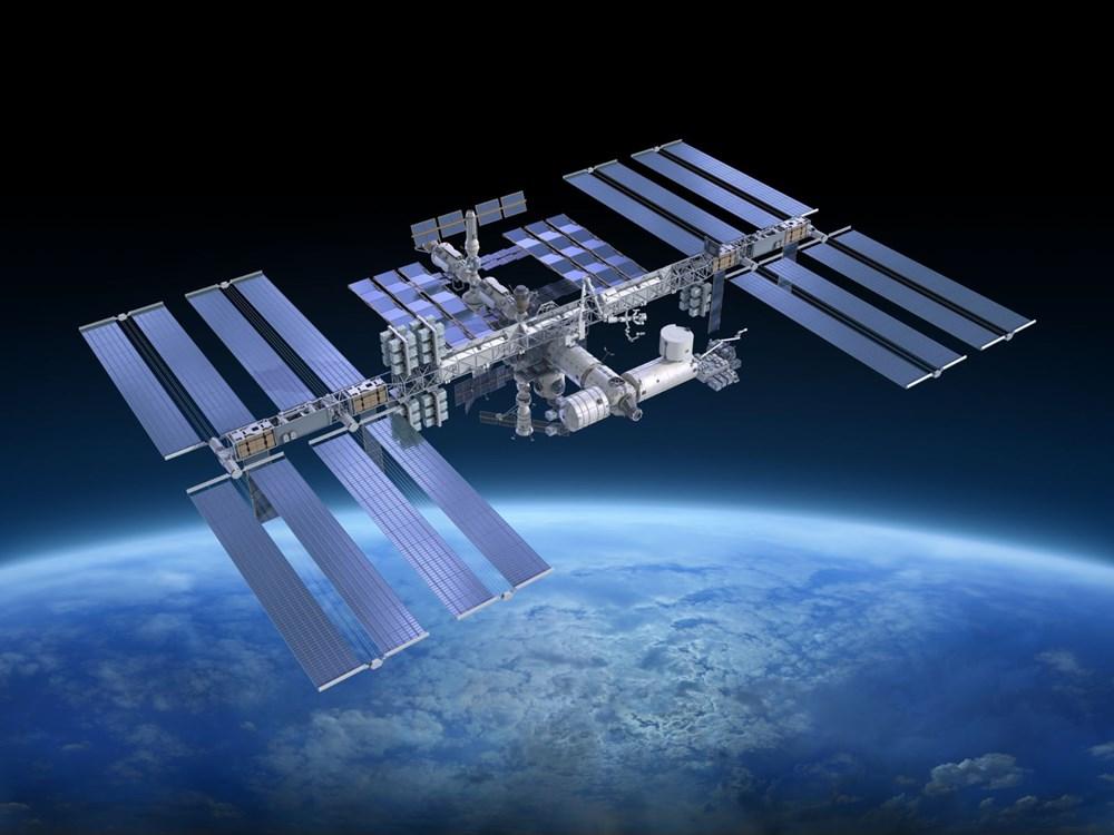SpaceX ve NASA'nın yavru mürekkep balıkları taşıyan roketi fırlatıldı: İnsanlara çok benzeyen bağışıklık sistemleri var - 4
