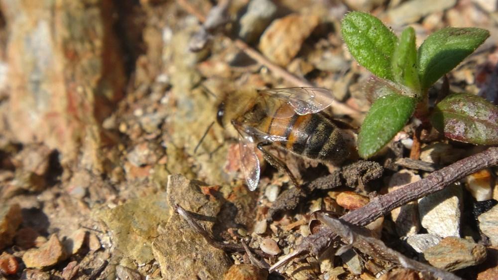 Yalancı baharın ardından gelen kış şartları arıcıları vurdu - 3