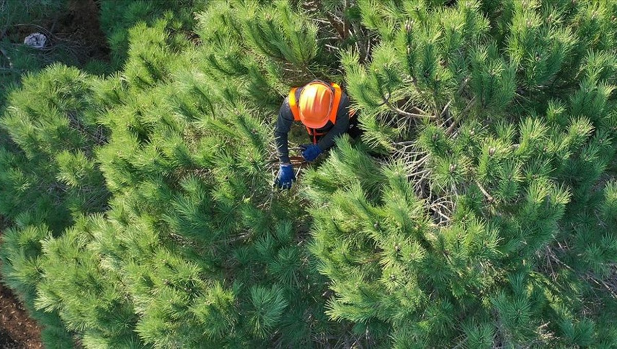 Orman Genel Müdürlüğü 2 bin 83 işçi alımı yapacak