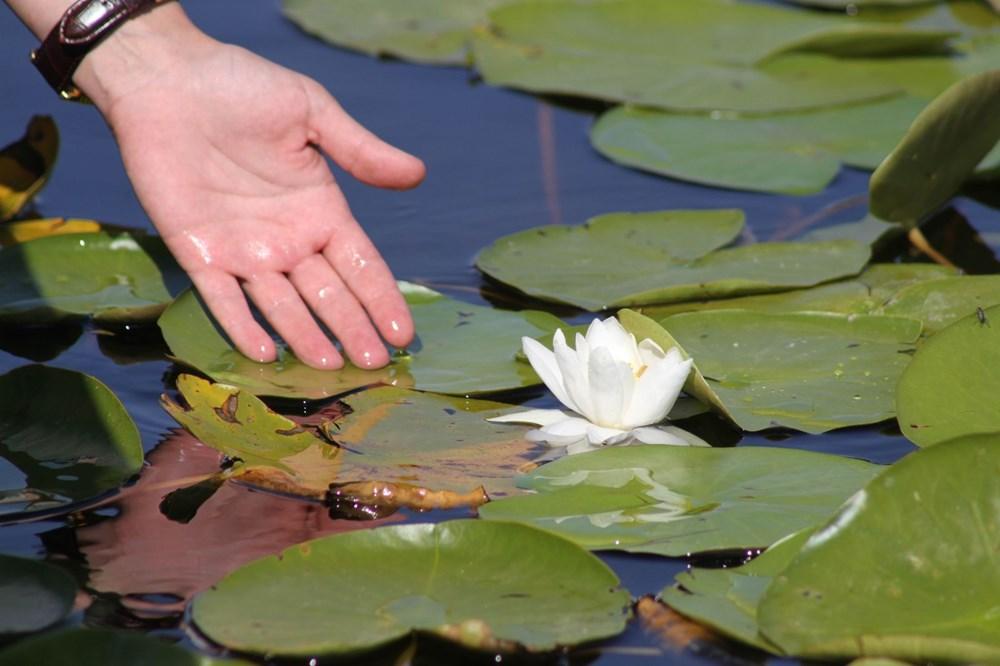 Türkiye'nin en büyük nilüfer bahçesi: Beyşehir Gölü - 12