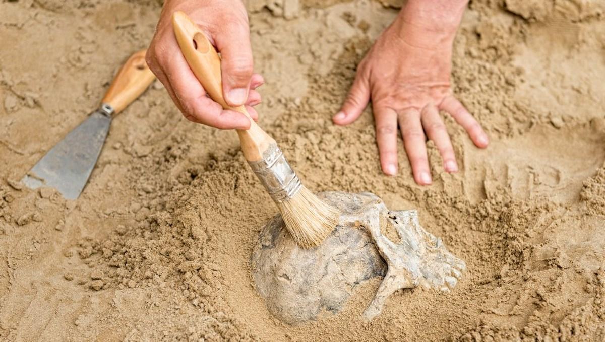 İsrail'de yeni bir antik insan türü keşfedildi