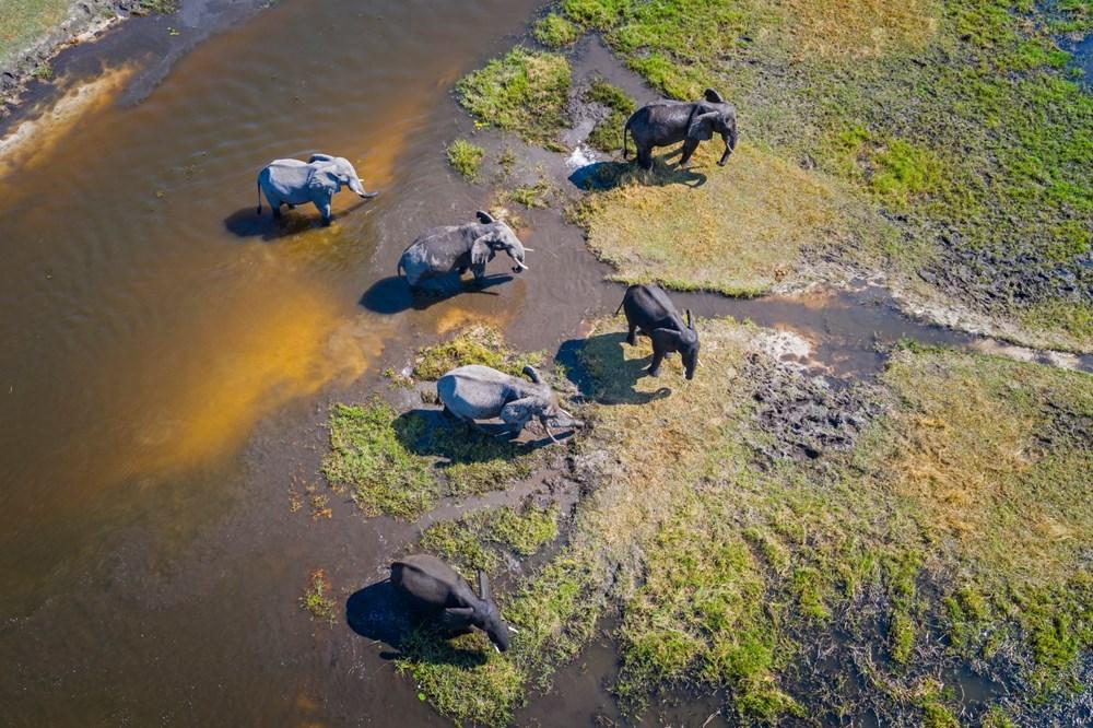 Bostvana'da yüzlerce fil gizemli bir şekilde öldü - 3