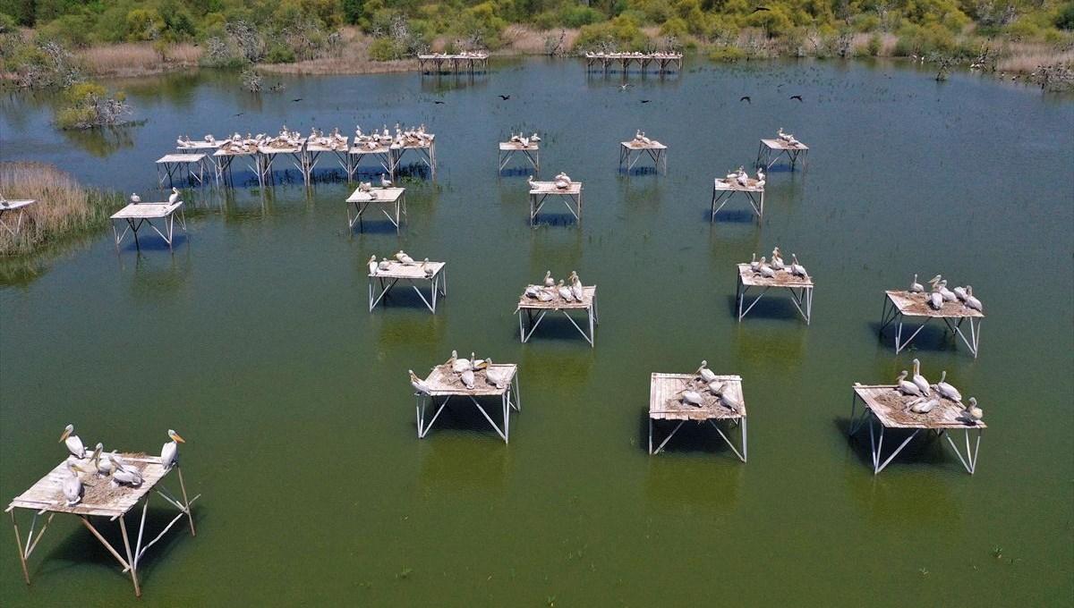 Balıkesir'in büyülü güzelliği Kuş Cenneti Milli Parkı'nda belgesellik görüntüler