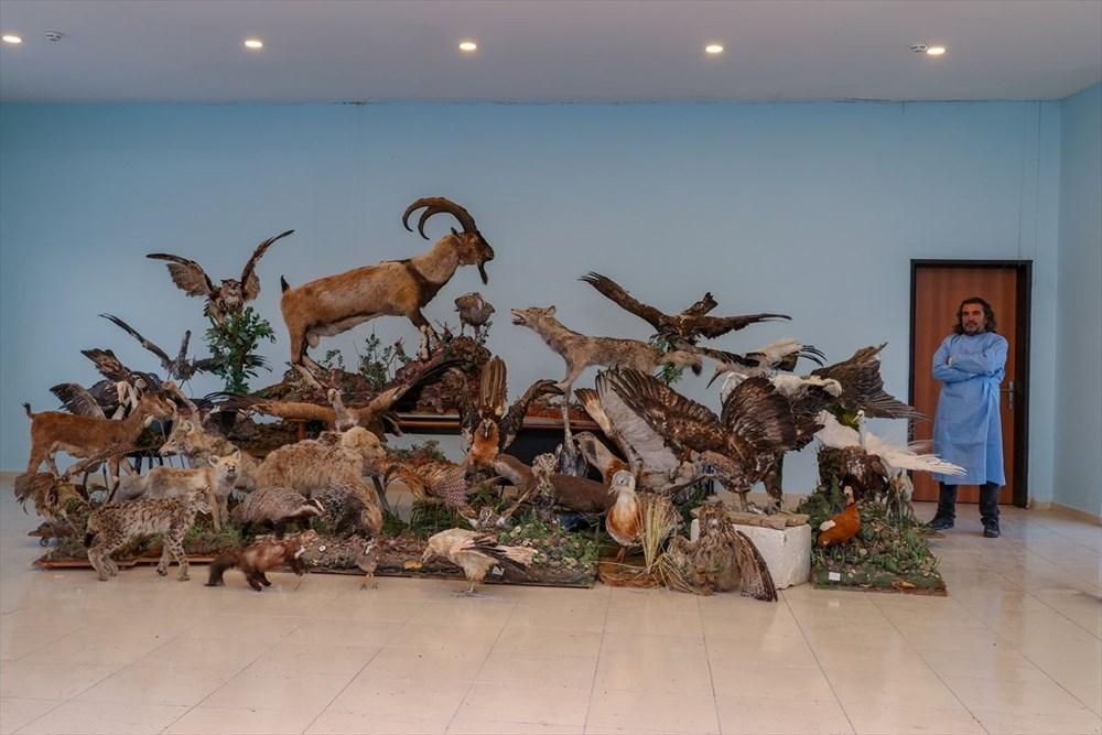 Van'da yaban hayvanları tahnit sanatıyla müzede tanıtılacak - 20