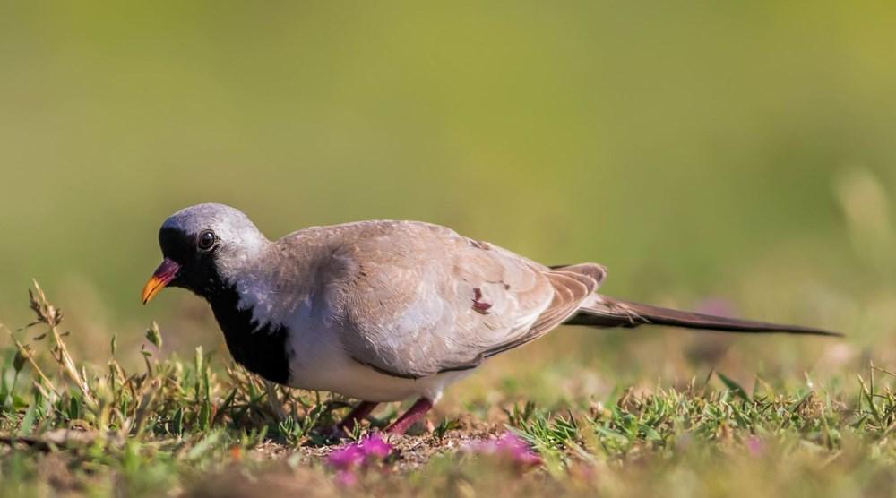 Fotoğraf tutkunu cumhuriyet savcısı 358'inci kuş türünü belgeledi - 2