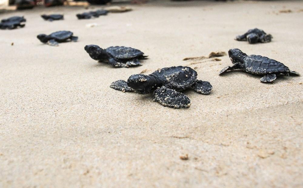Plastik kirliliği Akdeniz'de kimyasal düzeylere ulaştı: Caretta carettalar ölüyor - 9