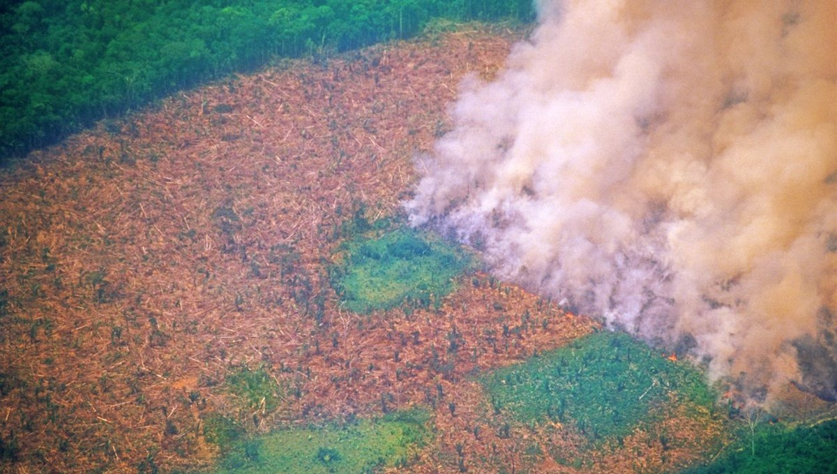 Research: Amazon emits more carbon dioxide than it absorbs