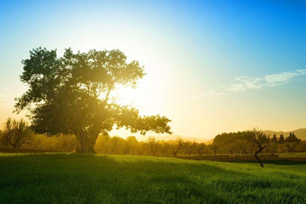 Araştırma: Her üç ağaçtan biri yok olma tehlikesiyle karşı karşıya, hangi ağaçlar tehlikede? - 8