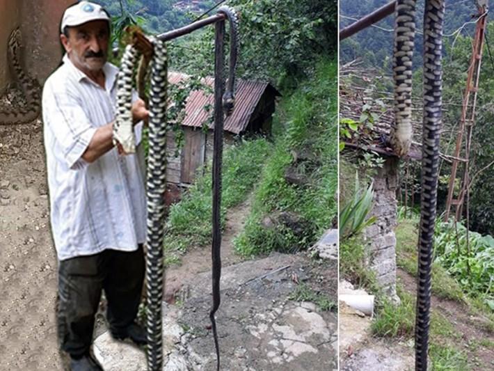 Karadeniz'de yılan korkusu: Zehri emerek değil, plastik enjektörle çekin