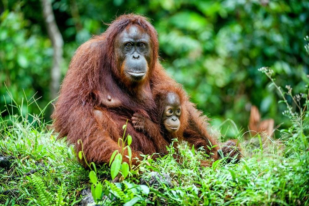 4 Ekim Dünya Hayvanları Koruma Günü hakkında her şey - 13