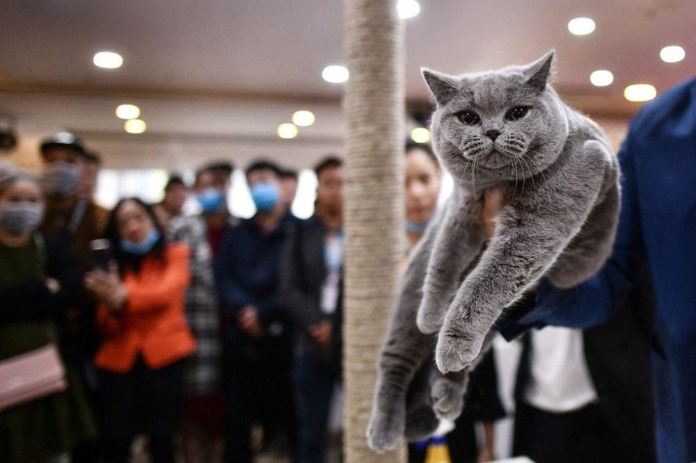 Araştırma: Karantina nedeniyle kediler insanlardan bıktı, sakinleştirici kullanıyorlar - 5