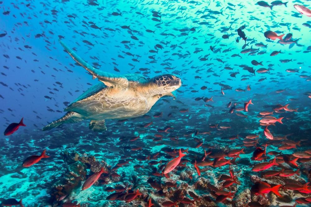 Plastik kirliliği Akdeniz'de kimyasal düzeylere ulaştı: Caretta carettalar ölüyor - 4