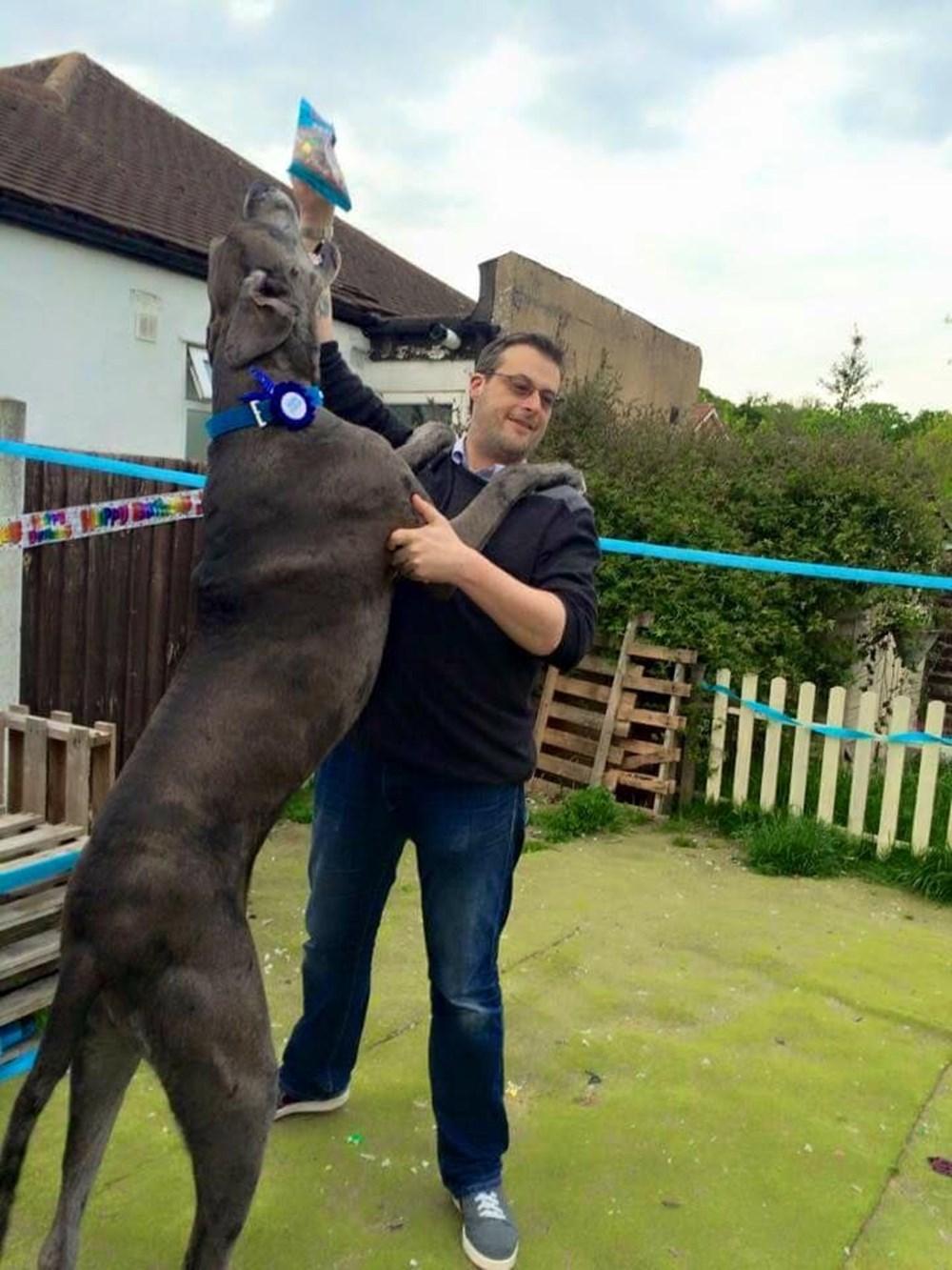 Dünyanın en uzun köpeği Freddy hayatını kaybetti - 4