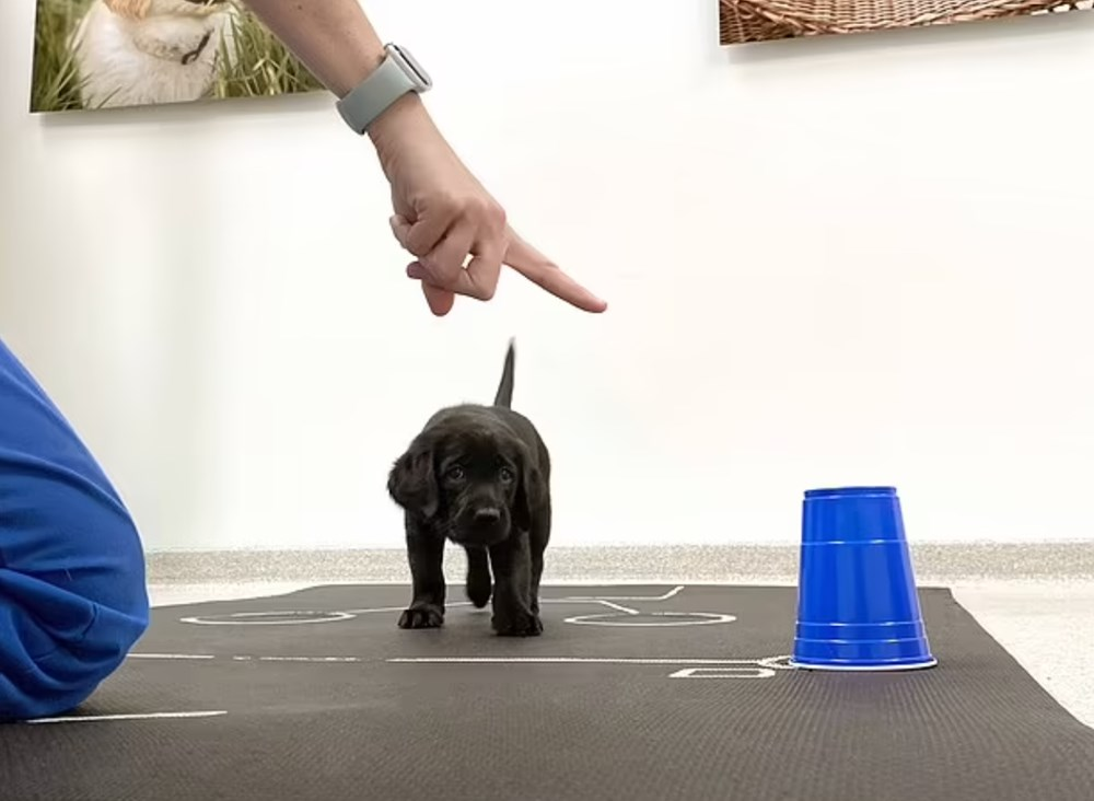 Köpekler doğdukları andan itibaren insanları anlayabiliyor - 6