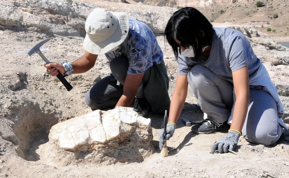 Kayseri'deki ilk kez 7,5 milyon yıllık kaplumbağa fosili bulundu - 3