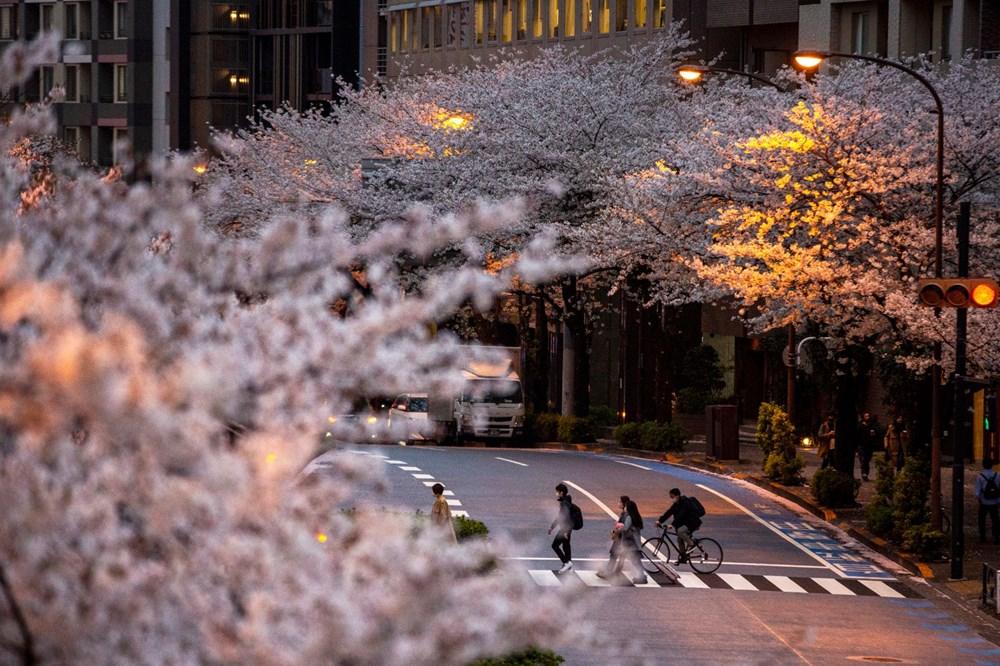 Sakura çiçekleri son bin 200 yıldır bu kadar erken açmadı: İklim değişikliği nedeniyle ekosistemler çökme noktasında - 9