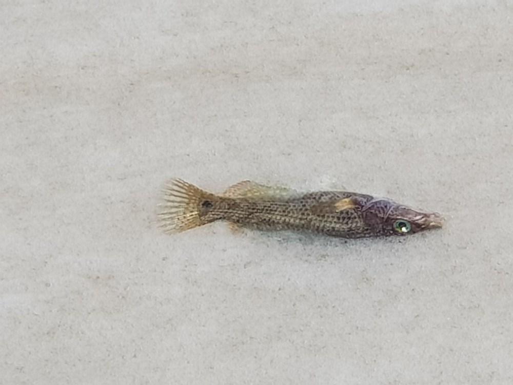 Çınarcık sahili deniz salyasıyla kaplandı - 3