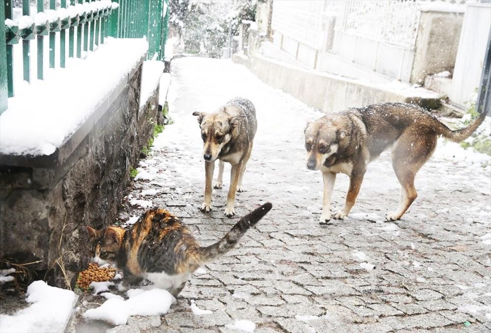 İstanbul'da kar yağışı devam ediyor - 23