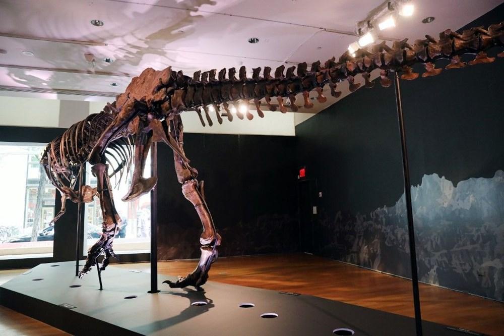 67 milyon yaşındaki dinozor iskeleti açık artırmayla satılacak - 2
