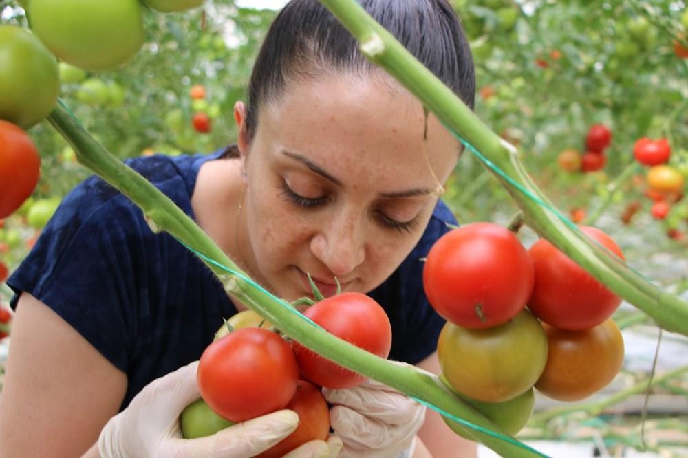 Elazığ'da topraksız tarım, kadınlara iş kapısı oldu - 3