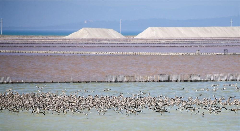 İzmir Kuş Cenneti'nde 18 bini aşkın yavru flamingo kreşte uçma hazırlığı yapıyor - 35