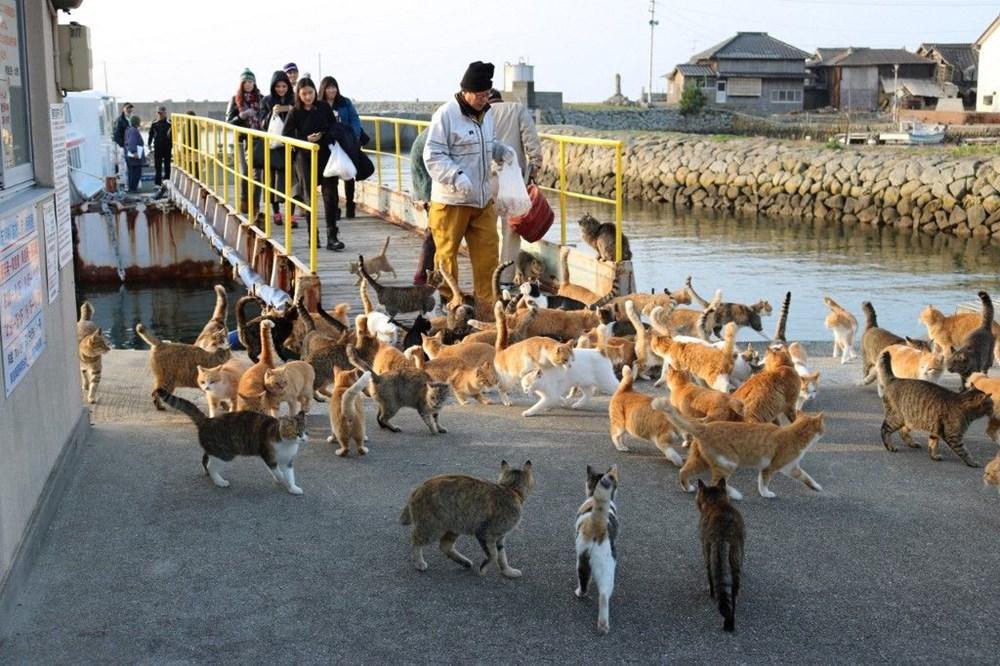 Japonya'daki kedi adası: Aoshima - 1