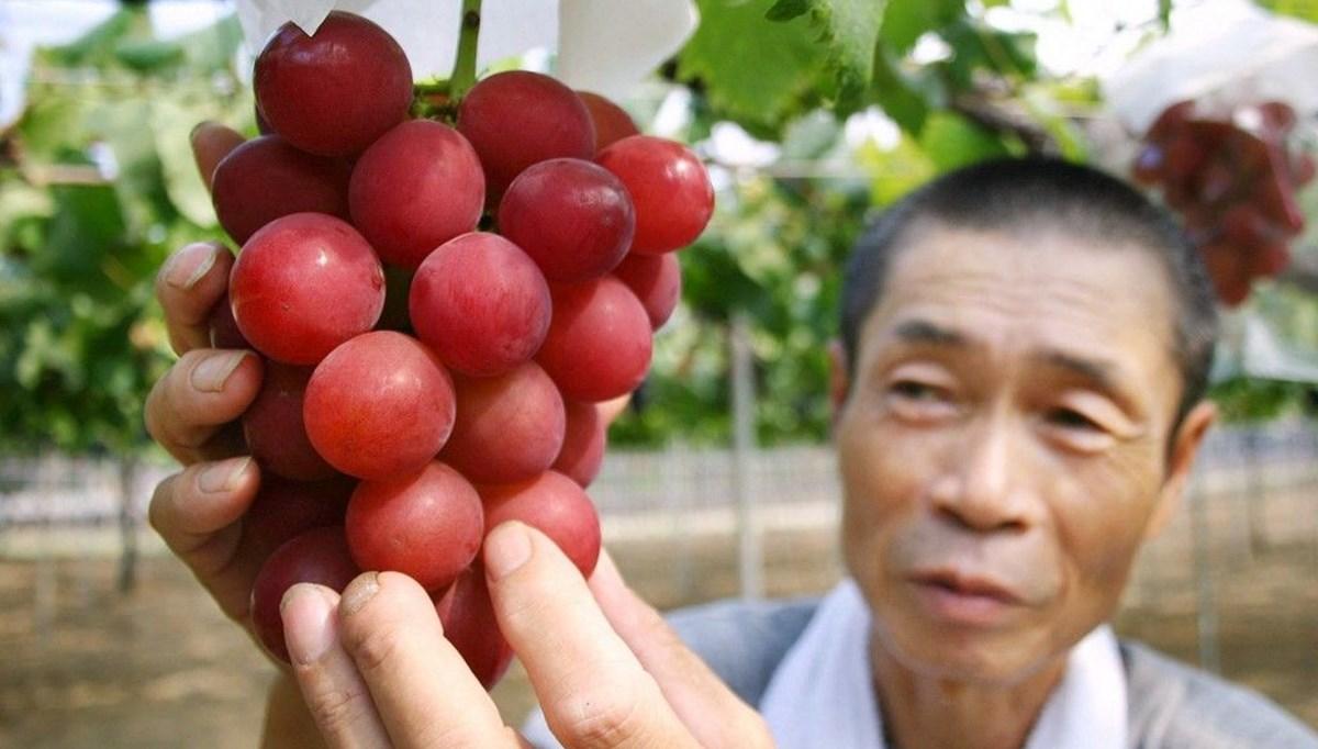 Japonya'da kızıl üzümün salkımı 1,4 milyon yene satıldı