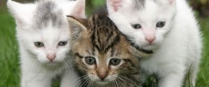 Ofiste Başarının Anahtarı Yavru Kedi Resimleri Ntv