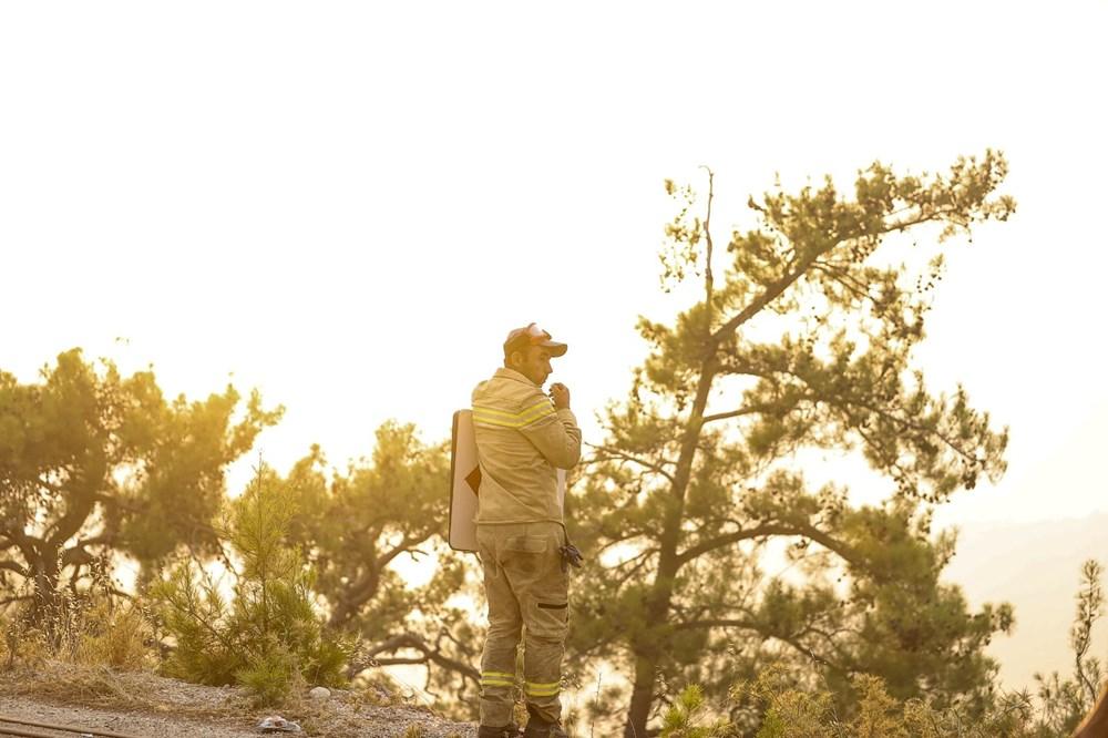 Yanan bölgelere hangi ağaç? Uzmanlar yanıtladı - 11